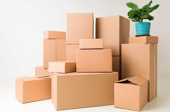 Box Organizado